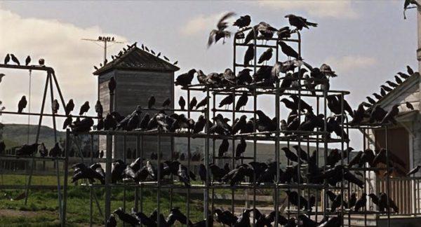 The-Birds-1-600x324