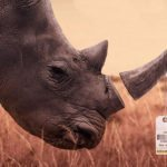 Exclusive clip and Q&A from acclaimed big game hunting documentary Trophy
