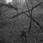Blair Witch TV series officially in development at Lionsgate