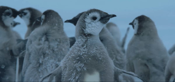 March-of-the-Penguins-2-trailer-screenshot-600x283