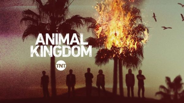 animal-kingdom-600x337