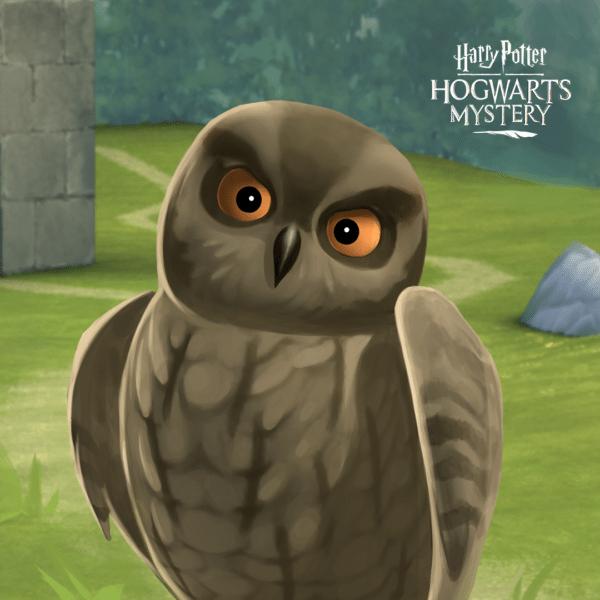 HPHM_Pets_Owl_Scops-600x600