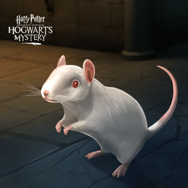 HPHM_Pets_Rat_Albino-600x600