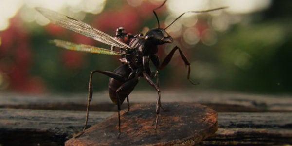 ant-man-2015-riding-anthony-scott-lang-paul-rudd-review-600x300-600x300