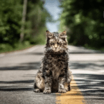 First look images from new Stephen King adaptation Pet Sematary