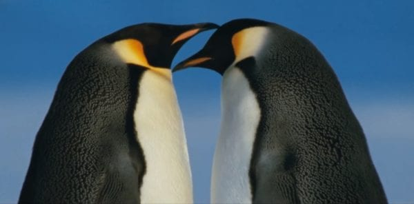 March-of-the-Penguins-2-screenshot-600x296