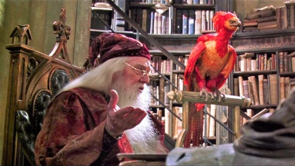 fawkes-harry-potter-600x338