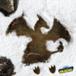Pikachu, Jigglypuff and Charizard make snow angels in Pokemon: Detective Pikachu posters