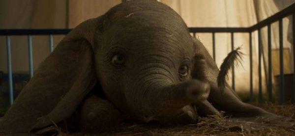 Dumbo-1-600x277