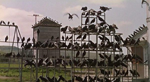the-birds-31-600x328