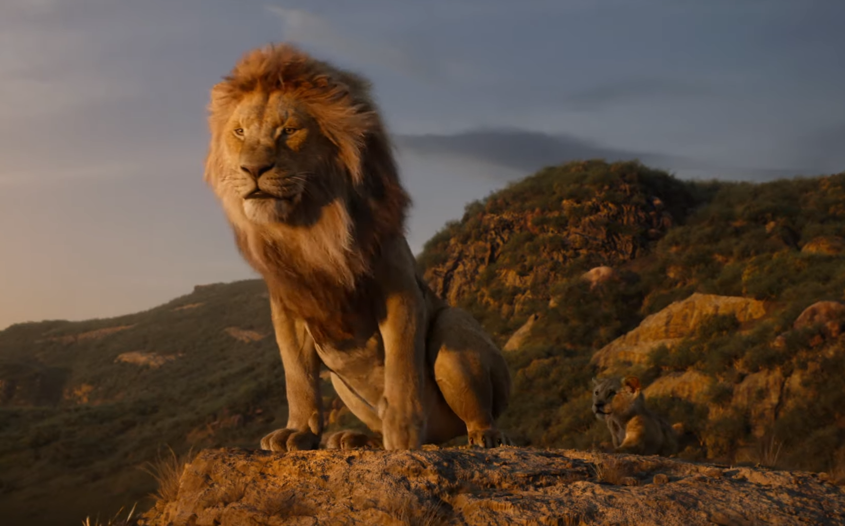This is a photo of Declarative Lion King Pictures