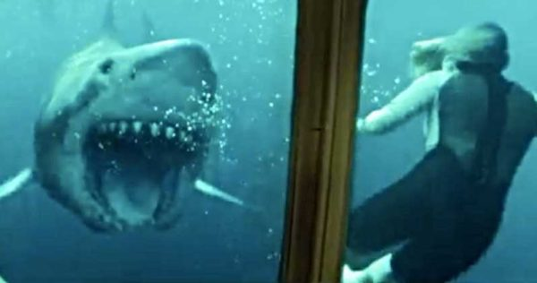 47-Meters-Down-Uncaged-Trailer-2-600x316