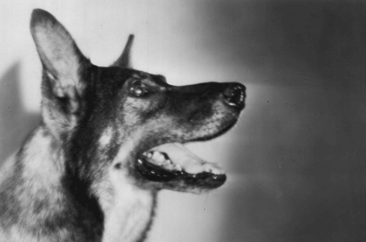 """Rin Tin Tin to be reimagined as """"the John Wick of dogs"""""""