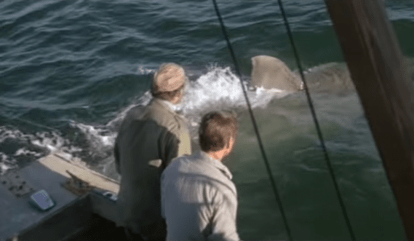 Jaws-1975-Youre-Gonna-Need-a-Bigger-Boat-Scene-4_10-_-Movieclips-1-17-screenshot-600x349