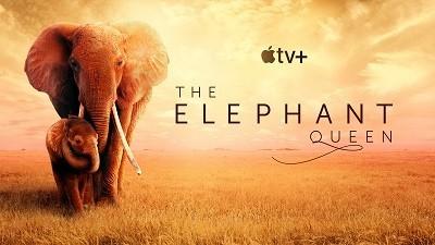 Elephant-Header