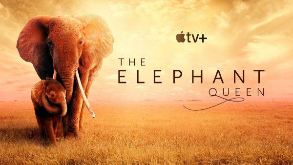 The-Elephant-Queen-600x338