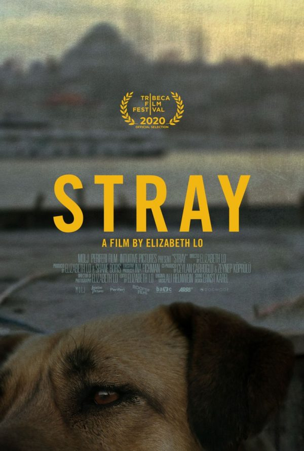 Stray-poster-600x889
