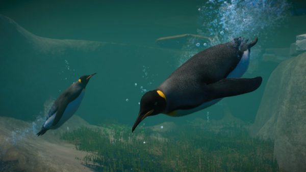 PZ_Aquatic_Paid_Screenshots_Penguin_01_3840x2160-600x338