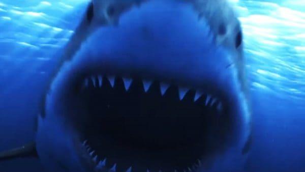 Shark-Island-Banner-600x338