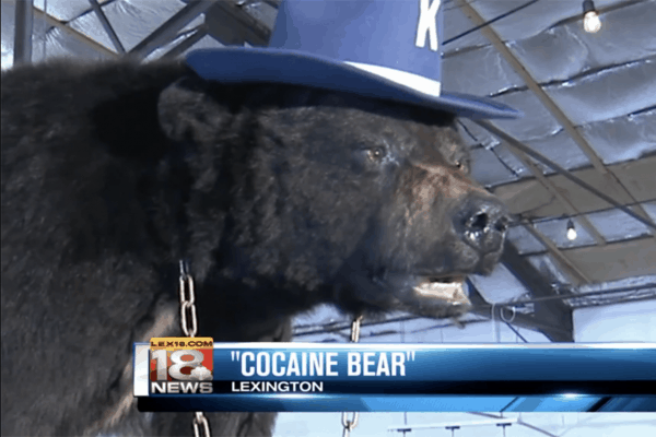 cocaine-bear-600x400